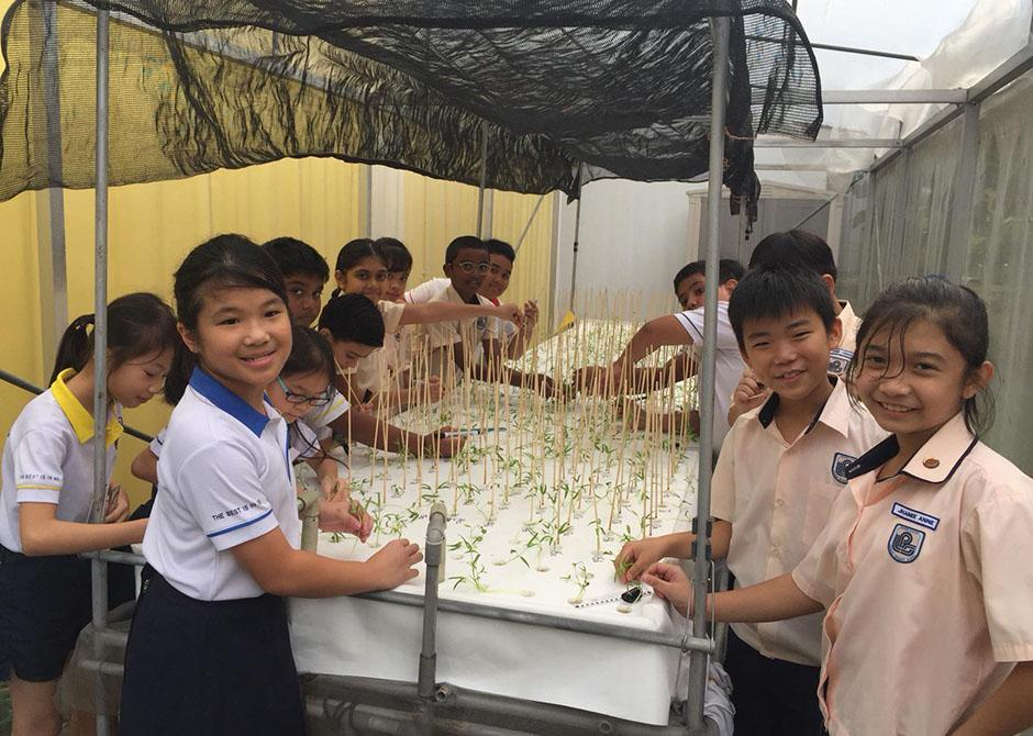 loyang-primary-school-hydroponics